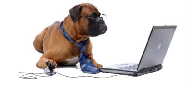 http://mybanner.co.uk/images/dogfront.jpg
